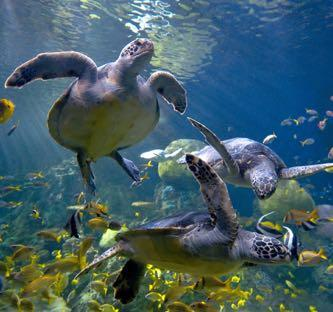 1605_sea-world-san-diego-la-jolla-turtles